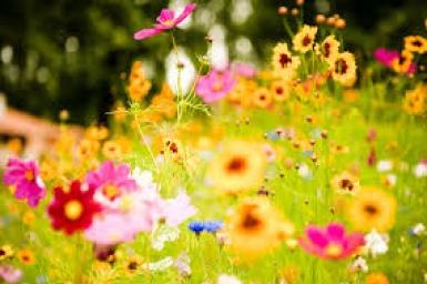 Những bông hoa của Chúa
