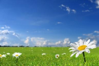 Thơ người áo trắng (3) - Chỉ xin là cỏ
