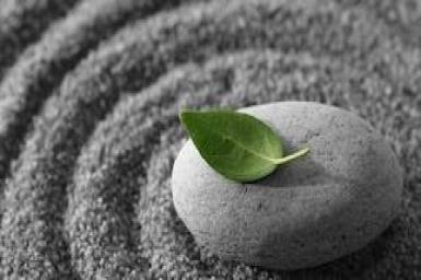 Sự sống con người theo lý Thiền (7): Tuân theo bản tính sự vật