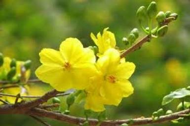 Mùa Xuân - Gm. Giuse Vũ Văn Thiên