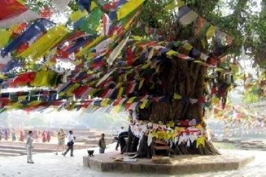 Đến để thấy, thấy để tin: LÂM TỲ NI nơi Phật đản sinh