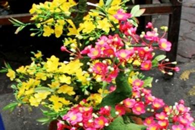 Hoa Tết: Hoa đào hay hoa mai?