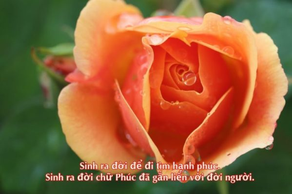 Đọc lại chữ Phúc trong cơn đại dịch (1)