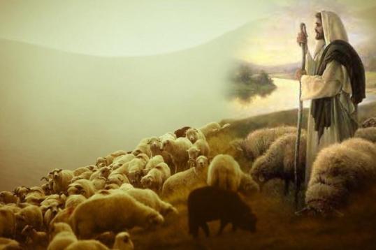 Tôi đến để chiên được sống: SN Tin Mừng CN IV Phục sinh A – Chúa chiên lành (7.5.2017)