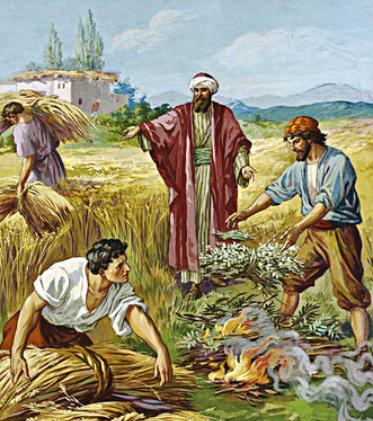 Học hỏi Phúc âm CN XVI TN A (Mt 13,24-43) - P.1