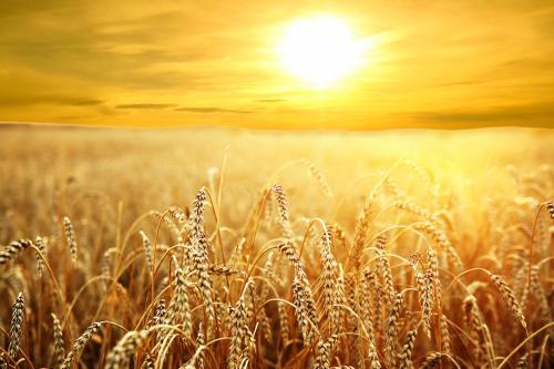 Sai thợ ra gặt lúa: SN Mừng Tin thứ Ba tuần XIV TN A (11.7.2017)