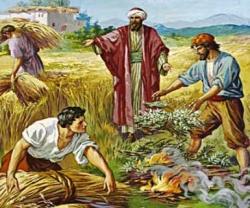 Học hỏi Phúc âm CN XVI TN A (Mt 13,24-43) - P.2