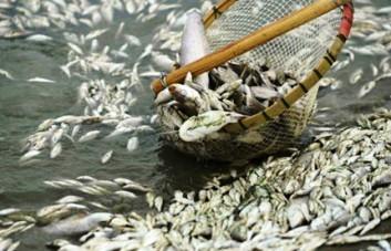 Thông báo về tình trạng cá chết bất thường