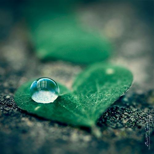 Thiền và thống nhất ý thức