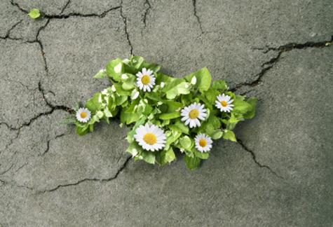 Những suy tư thâm trầm về cuộc sống (10)