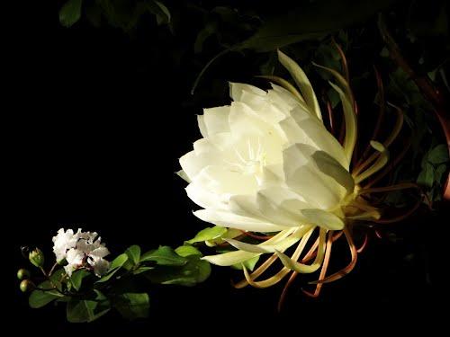 Hoa nở giữa đêm (Giải Viết Văn Đường Trường 2016)