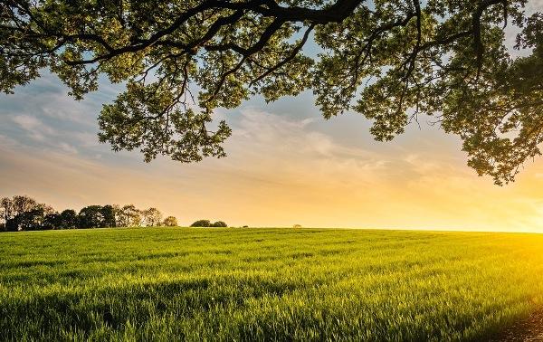 Các GM toàn châu Âu kêu gọi tôn trọng thụ tạo và bảo vệ môi sinh