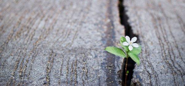Niềm hy vọng chữa lành