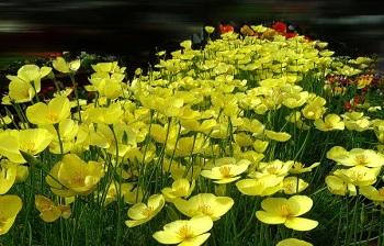 Thông điệp của mùa xuân