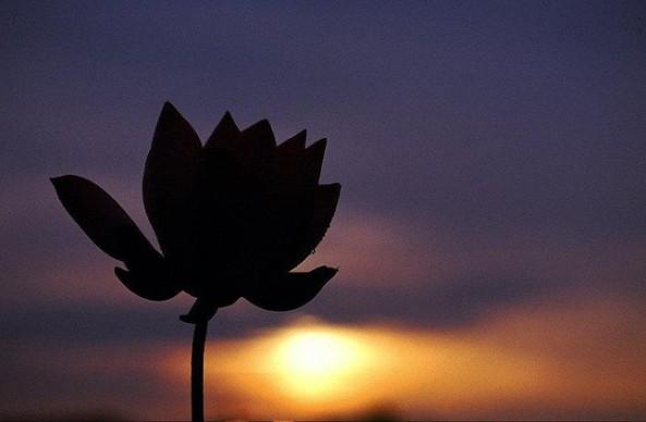 Niết-bàn và sanh tử đều là hoa đốm giữa hư không