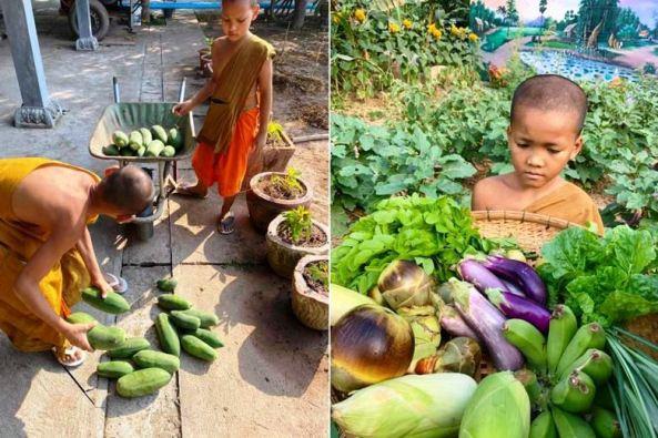 """""""Ngôi chùa xanh"""" trồng rau sạch tại Campuchia"""