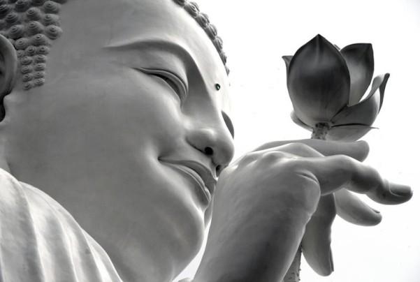 Tuệ giác của Đức Phật