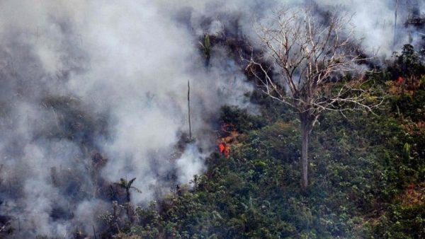 Liên HĐGM Châu Mỹ Latinh lên tiếng về vụ cháy rừng Amazon
