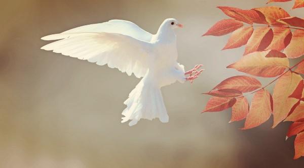 Các Giám mục Mêhicô kêu gọi củng cố hòa bình, bình đẳng, tình huynh đệ và cộng tác