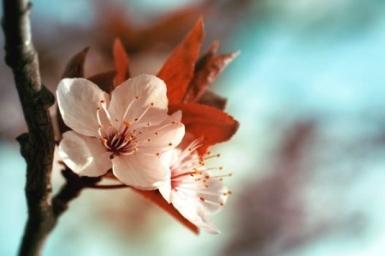 Xuân bất tận