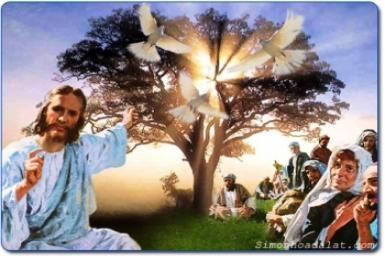 ``Các con hãy đi``: Tin Mừng CN XIV TN (C) bằng hình ảnh