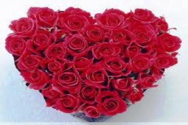 Bông hoa đỏ